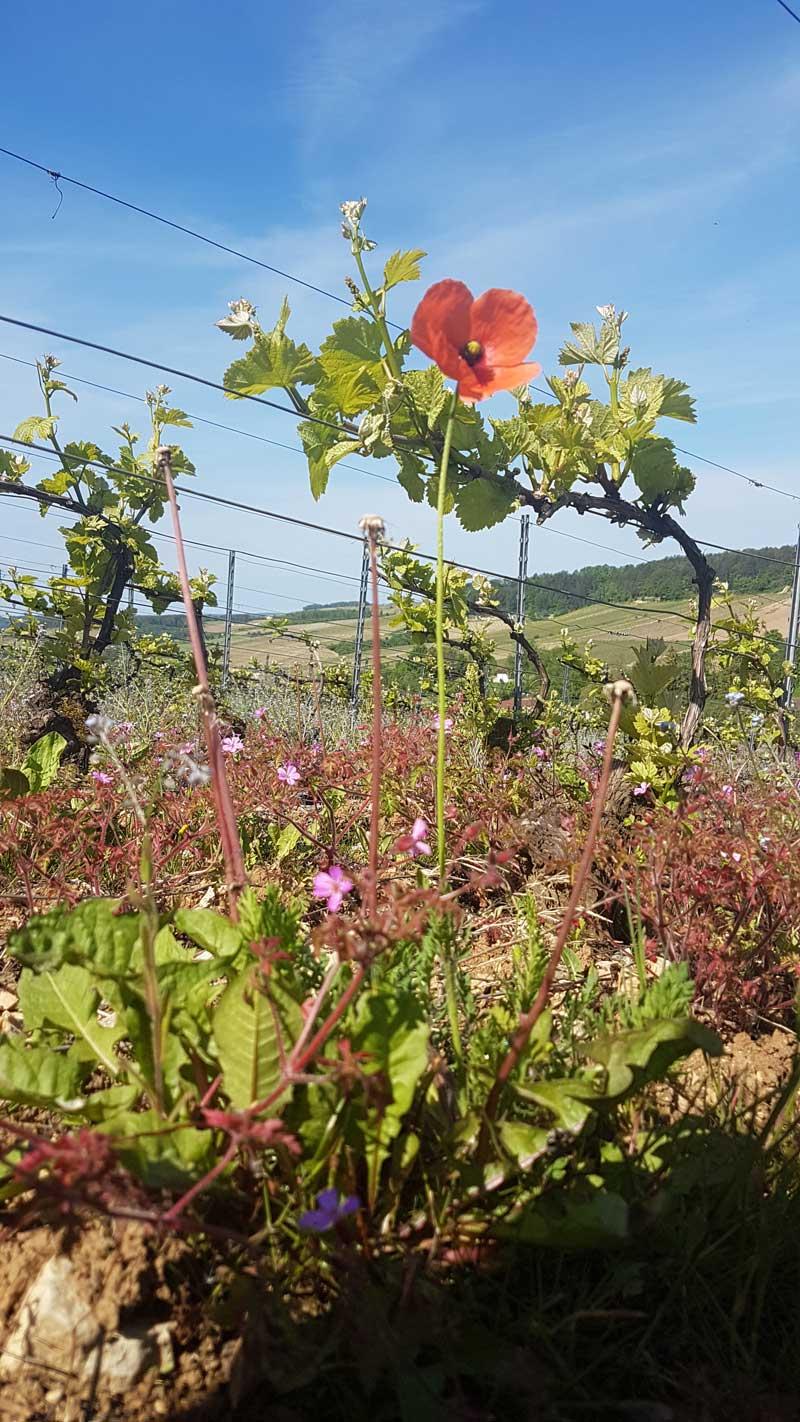 viticulture-raisonnee-prieure-viverie